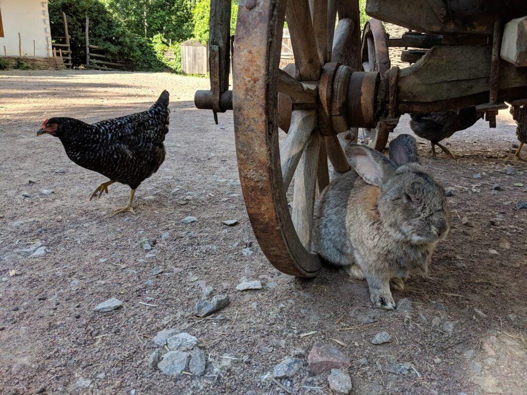Mamayeva Sloboda Farmyard Animals