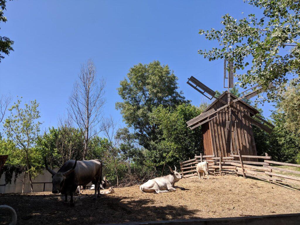 Mamayeva Sloboda Windmill & Cattle