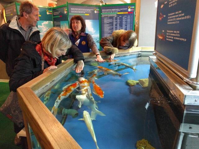 Koi Fish - Water Museum, Kyiv